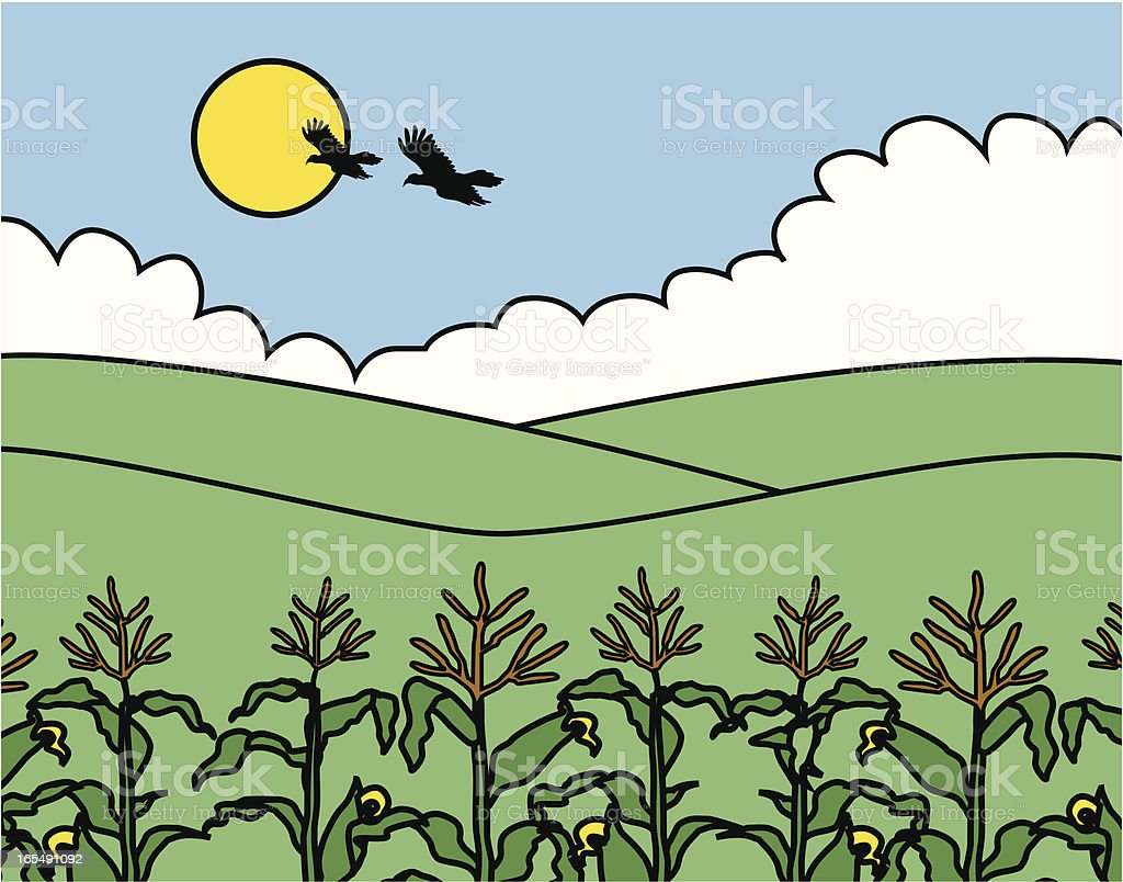 cornfield with crows vector art illustration