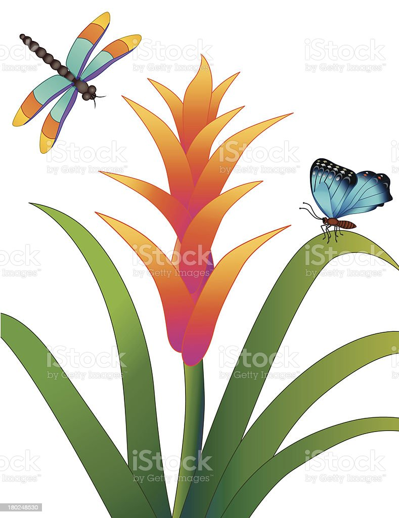 cornflower dragonfly and butterfly royalty-free stock vector art