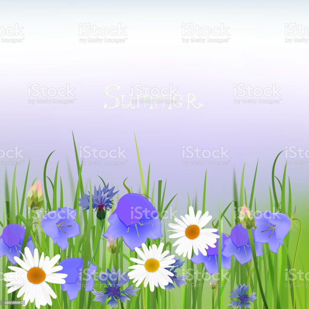 Cornflower vector art illustration