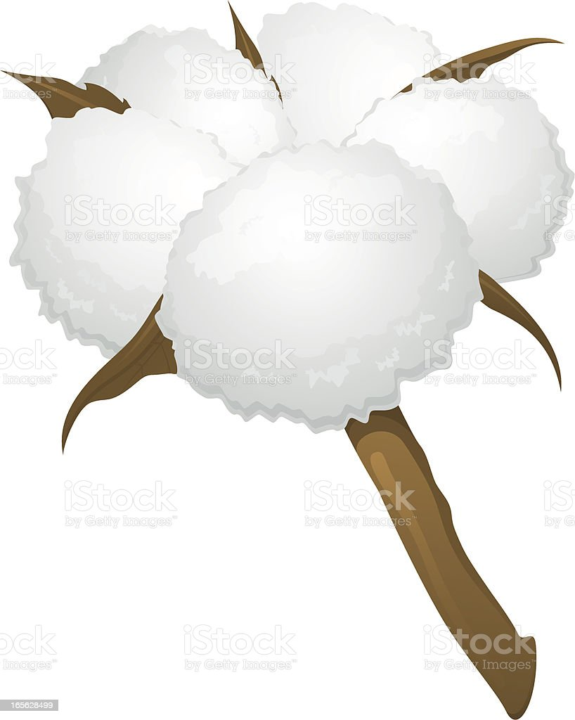 Cotton boll vector art illustration