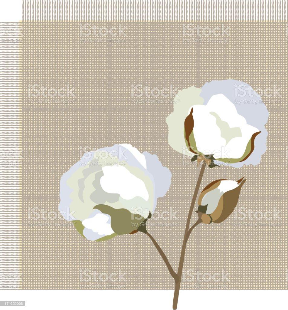 Cotton plant label vector art illustration