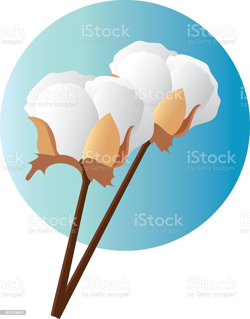 Cotton vector art illustration