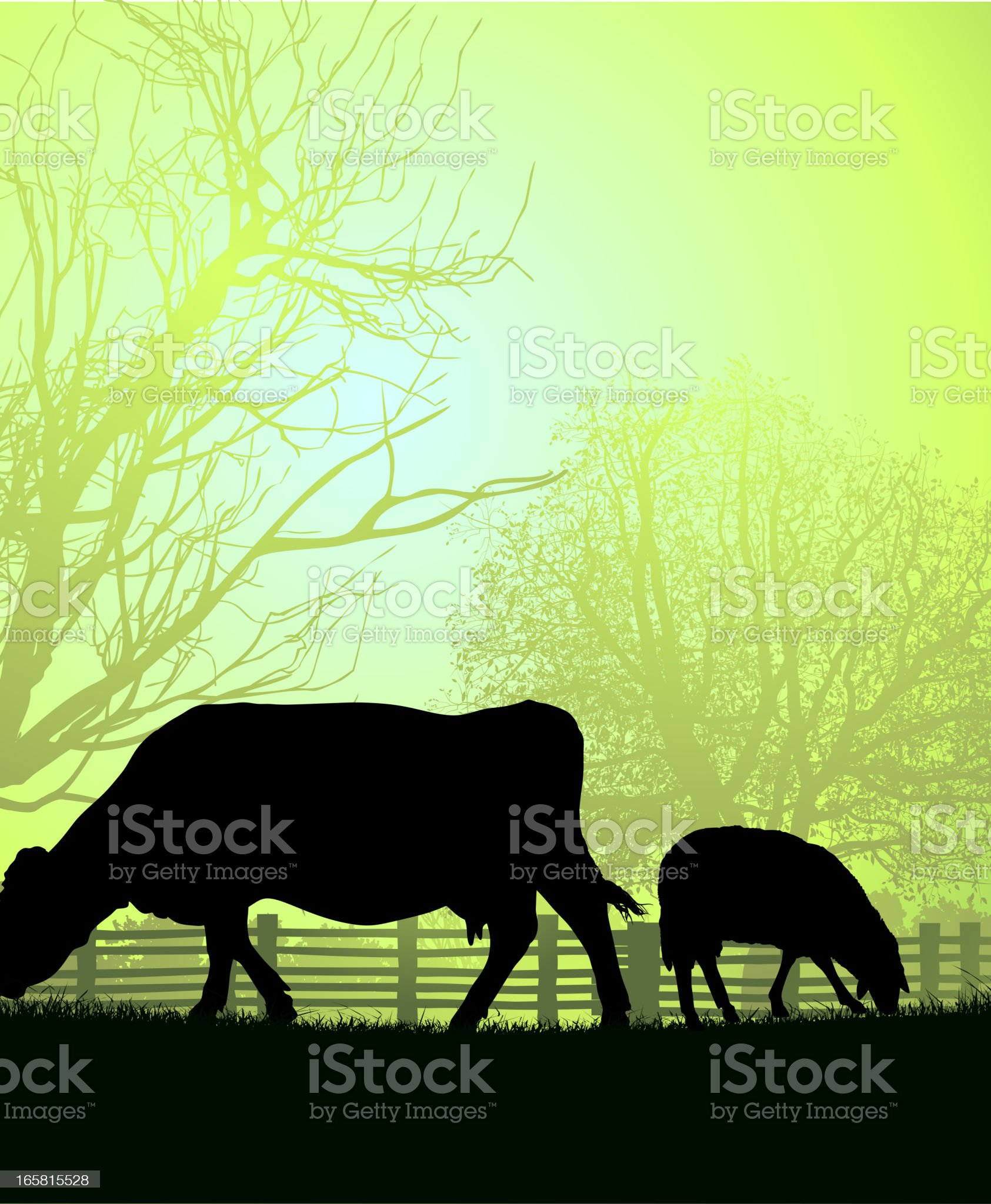 Cow and sheep silhouetted in field against misty sun light  royalty-free stock vector art