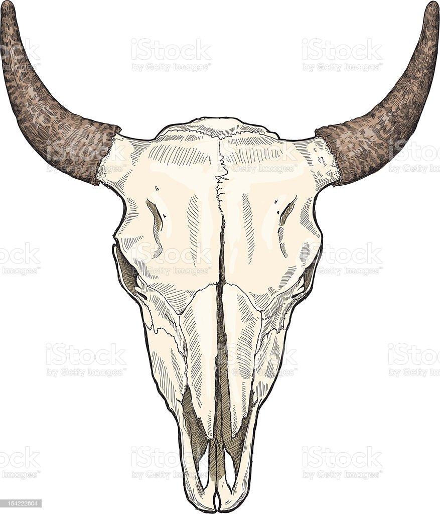 cow ckull vector art illustration