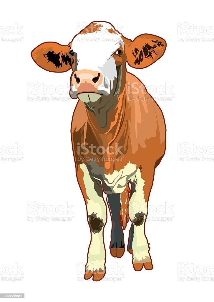 cow illustration art animals domestic vector art illustration