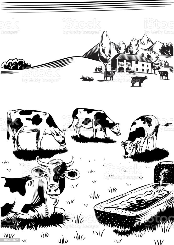 cows grazing vector art illustration