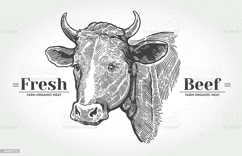 Cows head in graphical style. vector art illustration