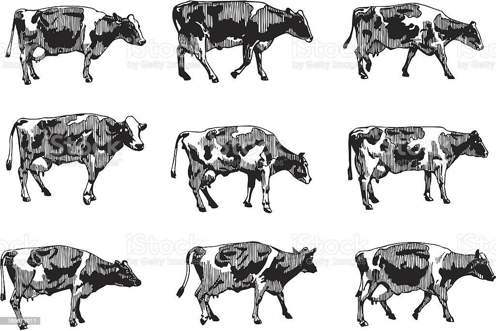 Cows vector art illustration