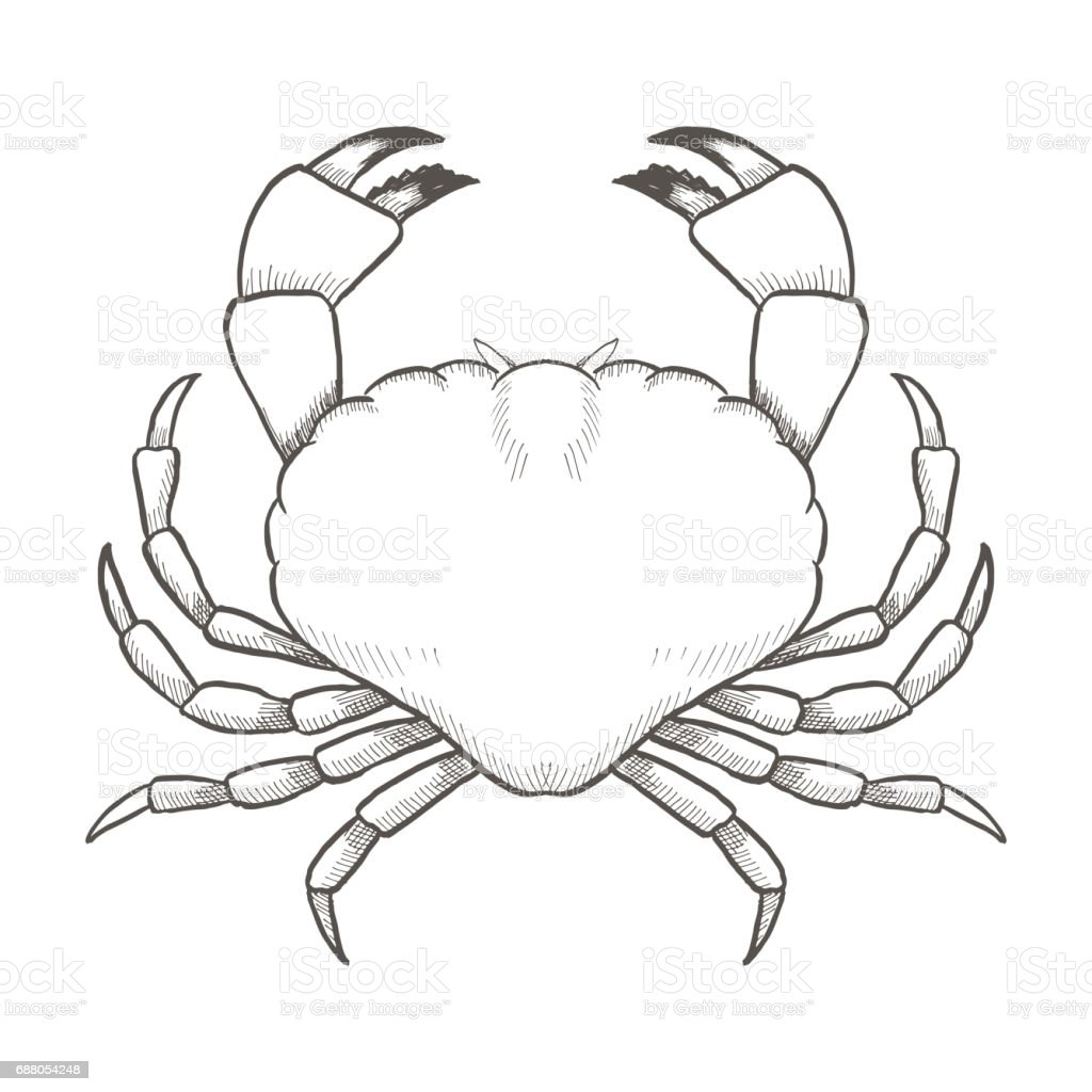 crab drawing on white background hand drawn outline Water Balloon Clip Art Water Balloon Clip Art