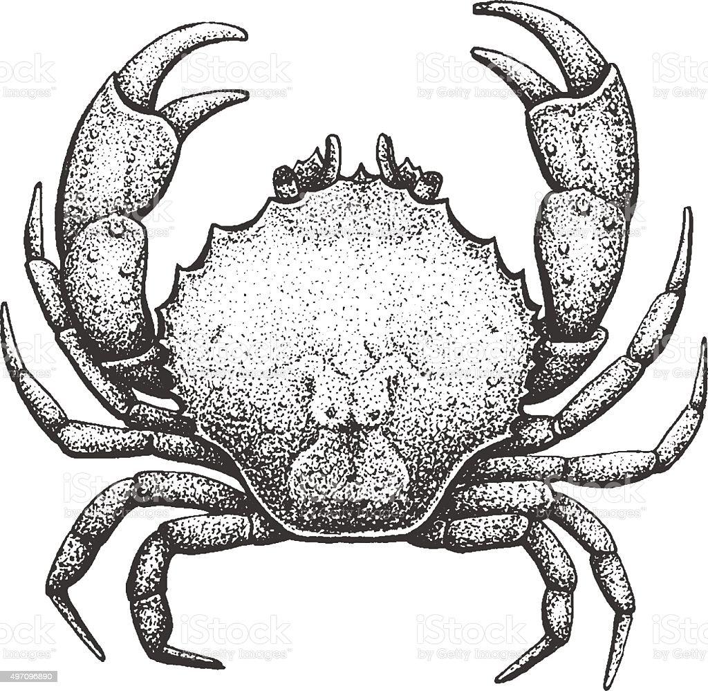 Crab Engraving Illustration vector art illustration