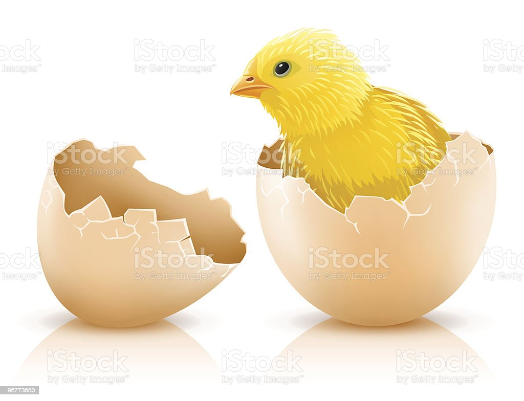 cracked hen's egg with chicken baby inside vector art illustration