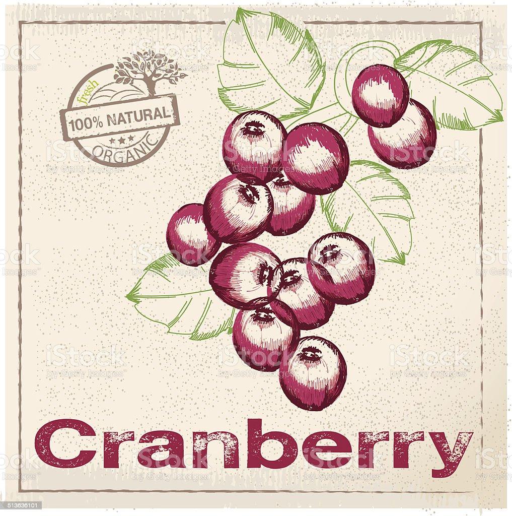 Cranberries composition hand drawn vector art illustration