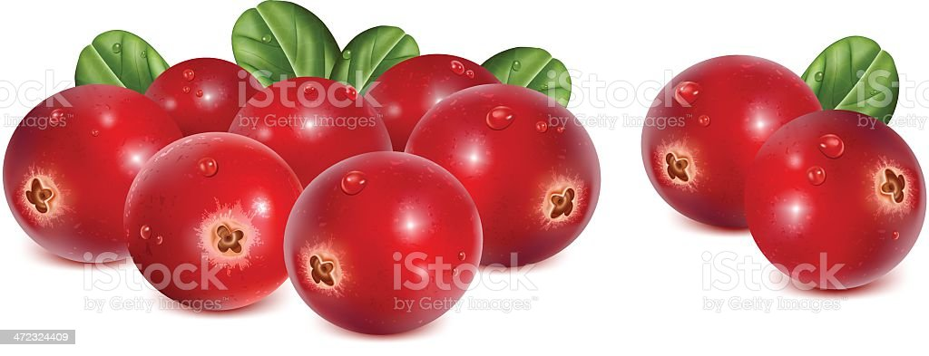 Cranberries with leaves and water drops vector art illustration