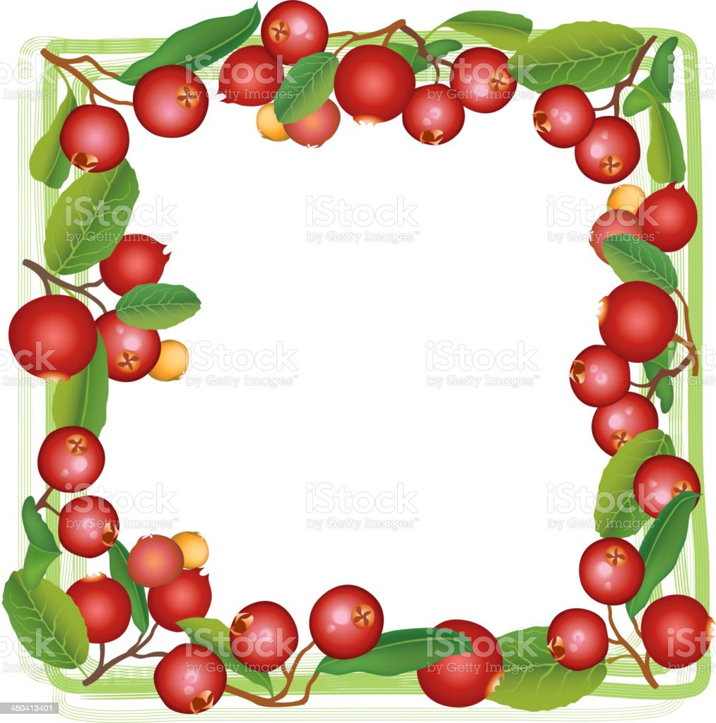 Cranberry frame. royalty-free stock vector art
