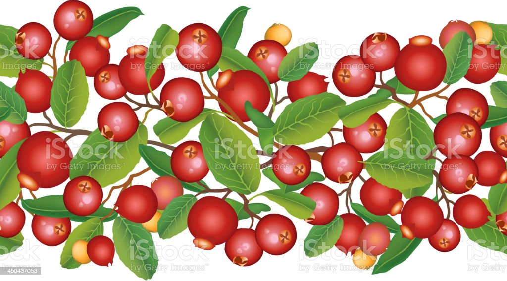 Cranberry seamless border royalty-free stock vector art