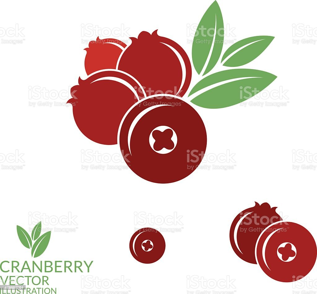 Cranberry vector art illustration