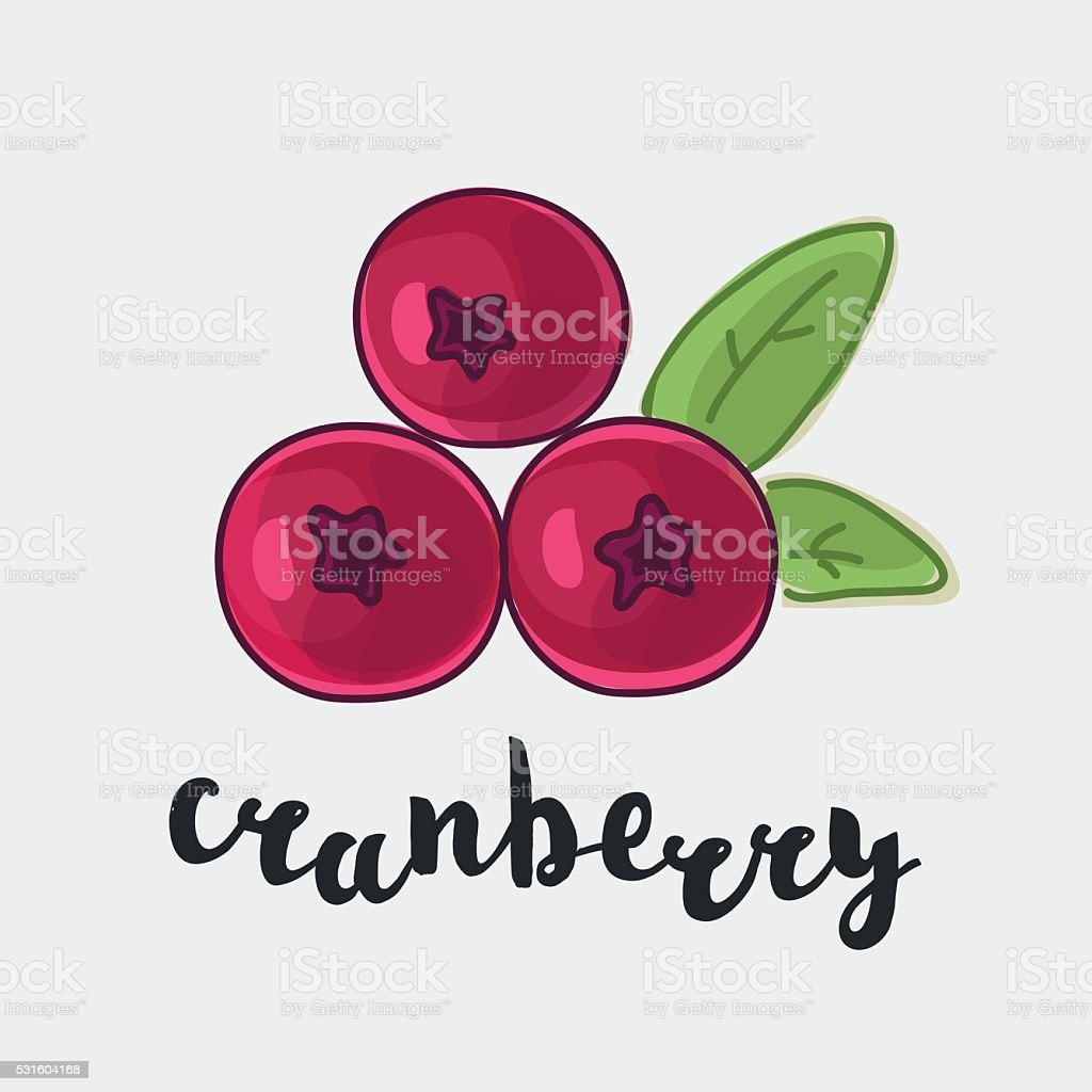 Cranberry with inking and name in English vector art illustration
