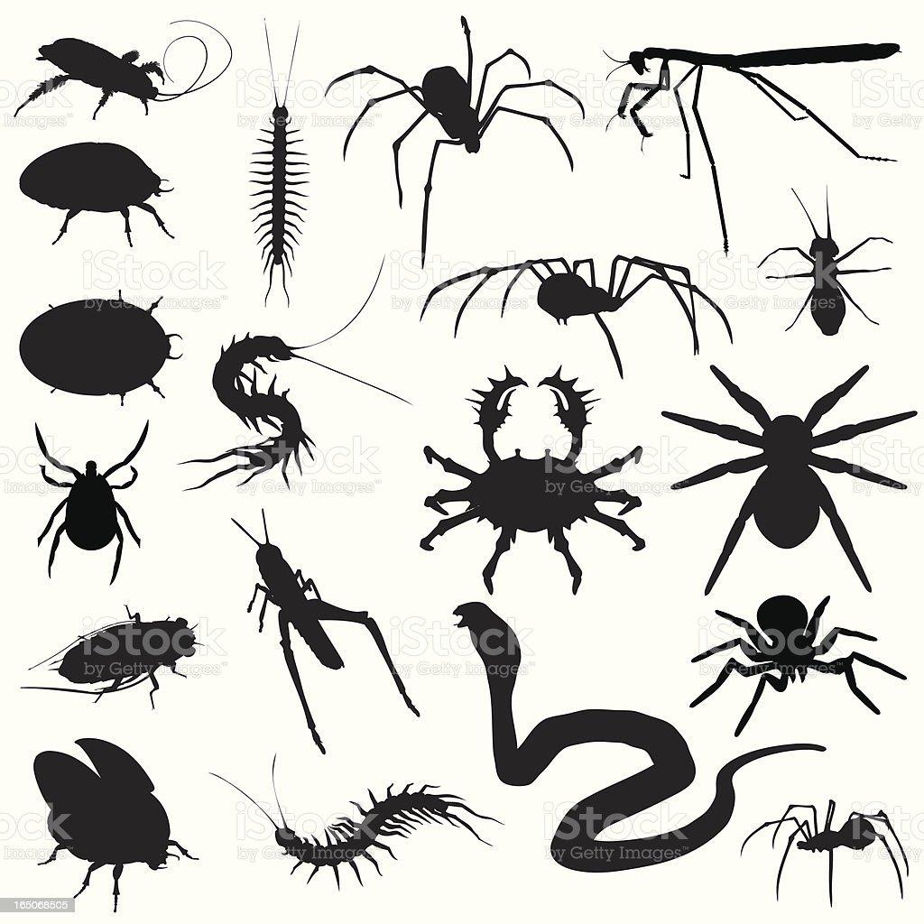 Creepy Crawlies! Bugs Spiders Snakes vector art illustration