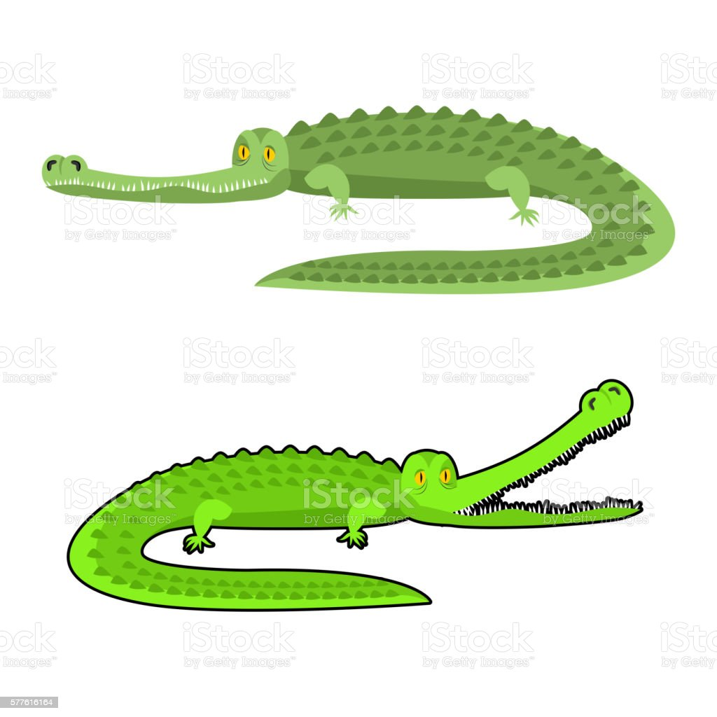 Crocodile isolated. Good caiman. Wild animal. Green reptile with big...
