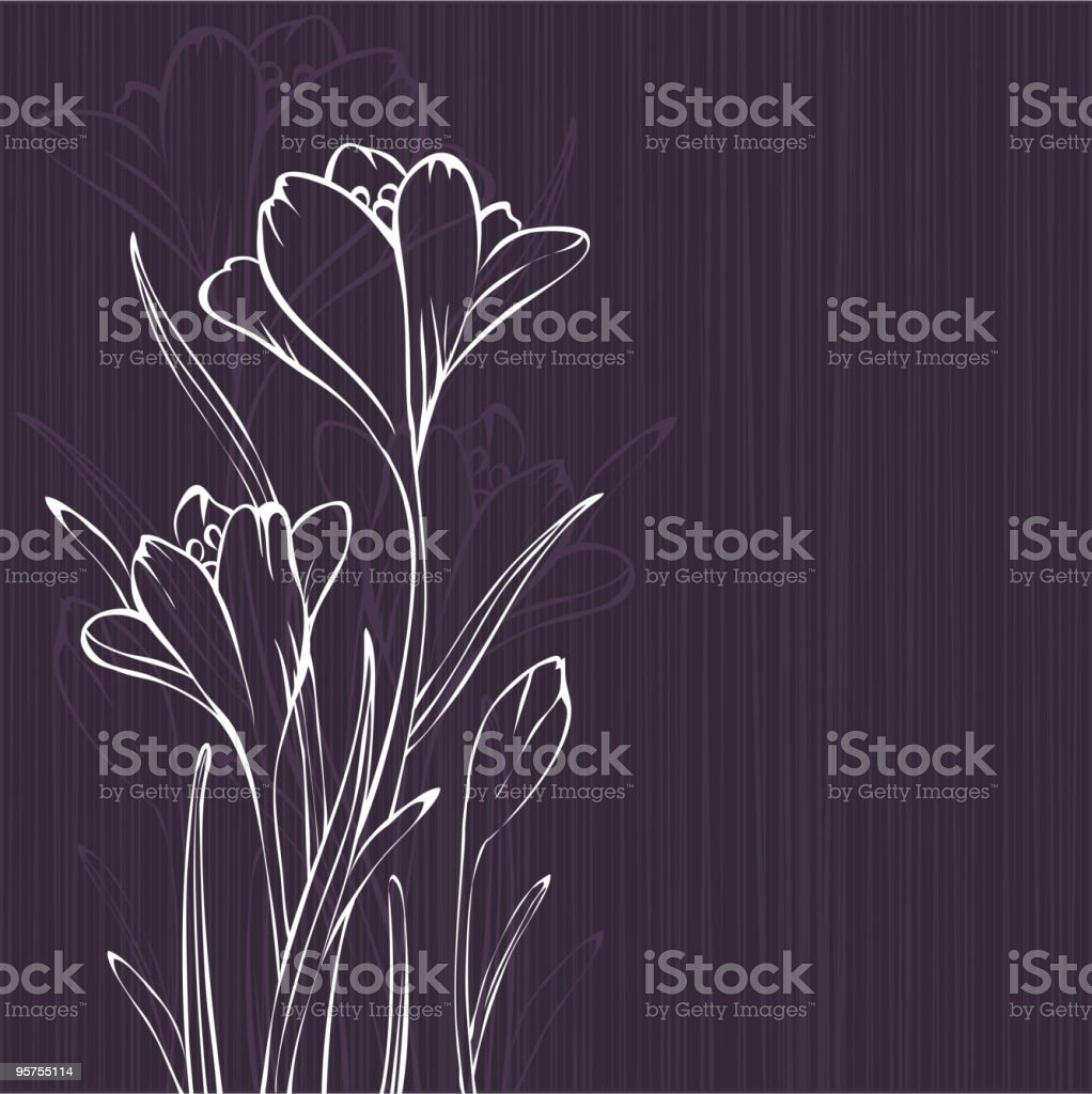 Crocus design vector art illustration