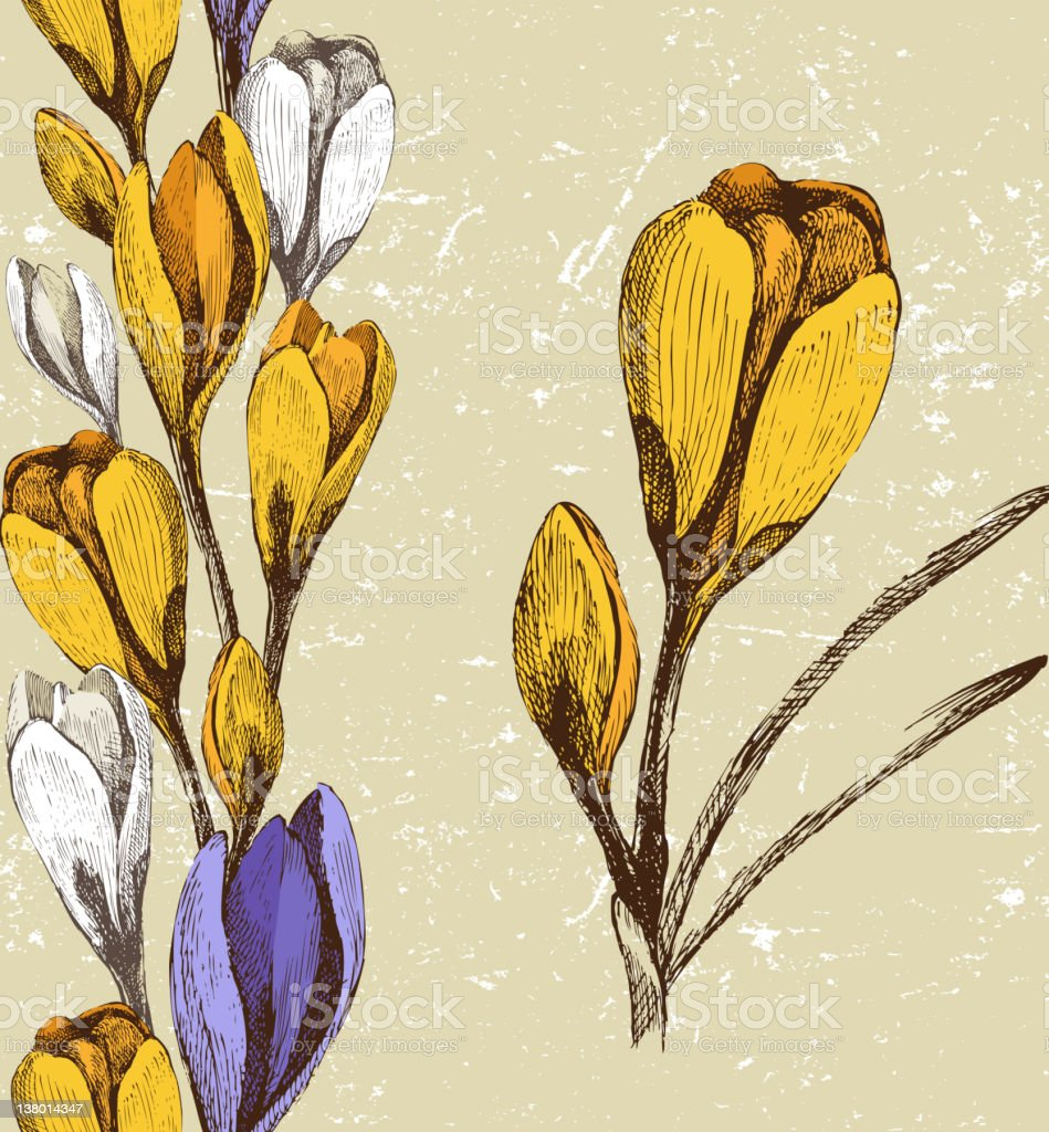 crocus flower and seamless floral border royalty-free stock vector art