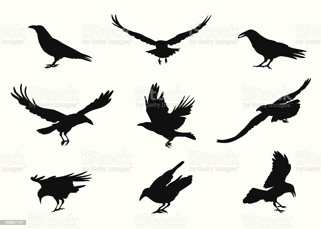 Crow-ing Vector Silhouette royalty-free stock vector art