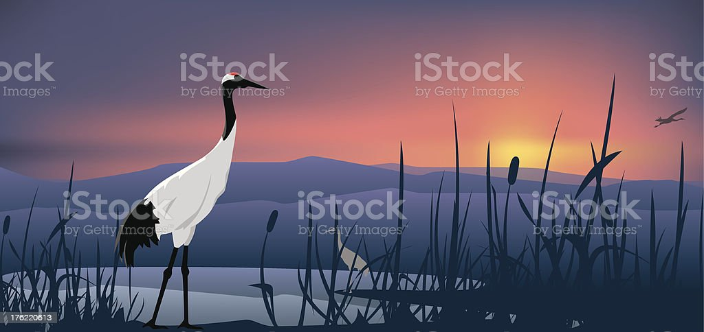Crowned Crane vector art illustration
