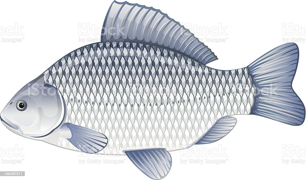 Crucian carp royalty-free stock vector art