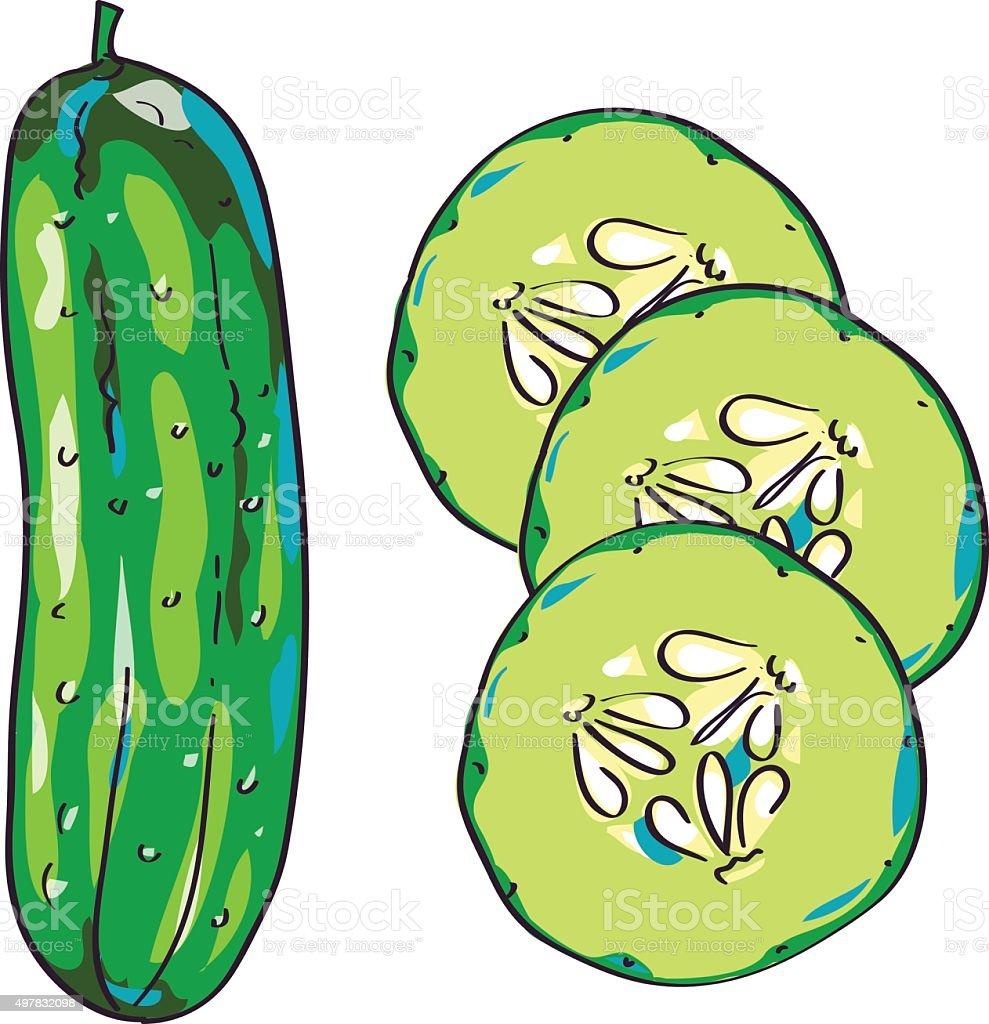 Cucumber sketch, hand drawn illustration vector art illustration