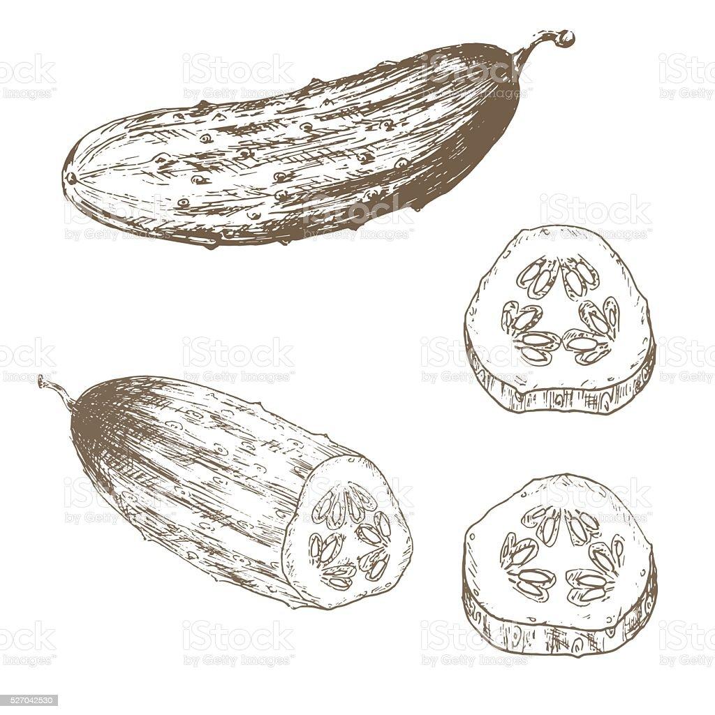 Cucumber slice set vector art illustration