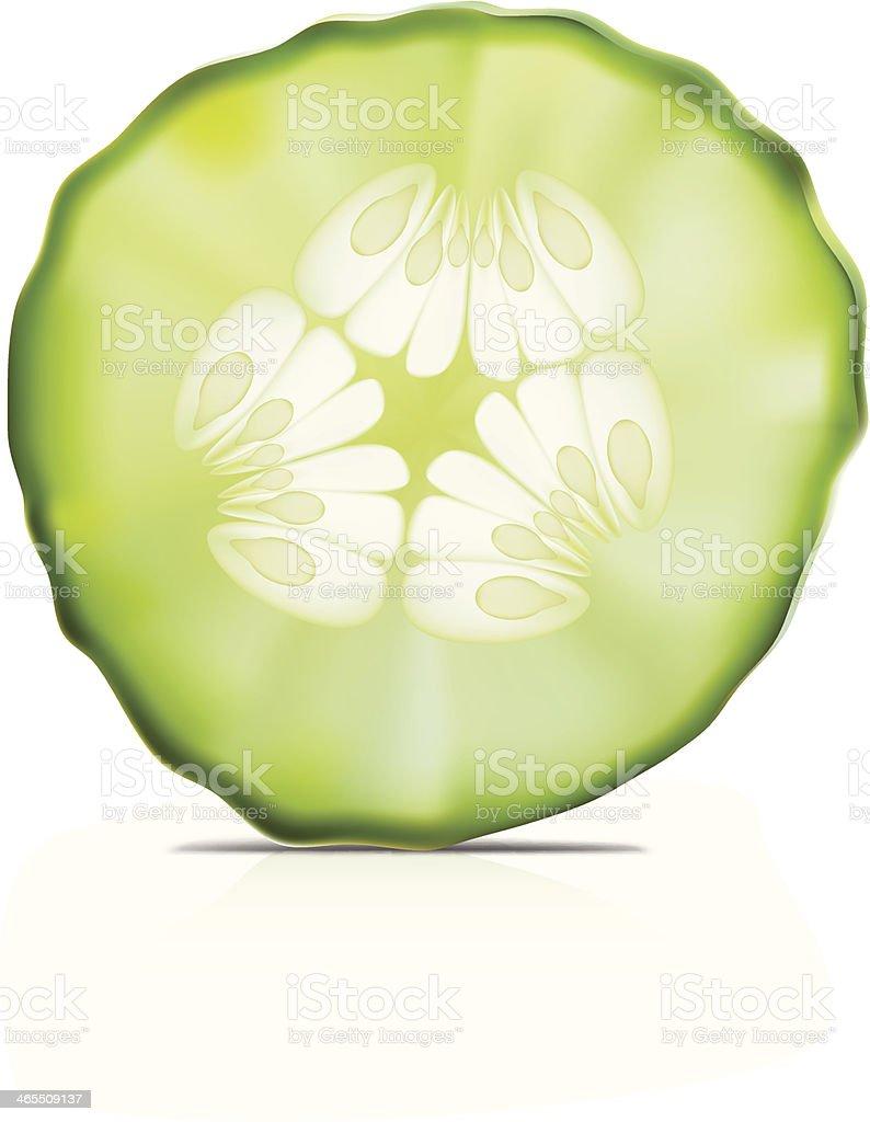 Cucumber- Vector illustration vector art illustration
