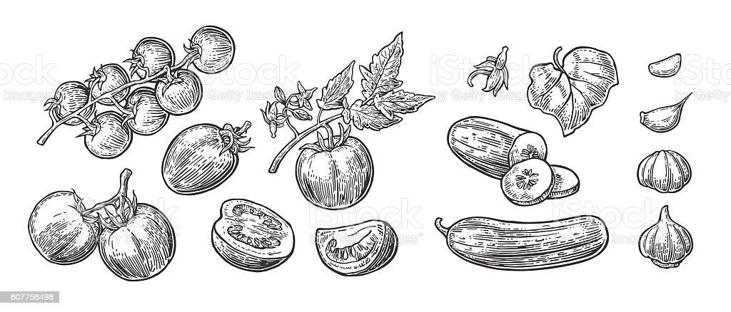 Cucumbers, Garlic and Tomato vector art illustration
