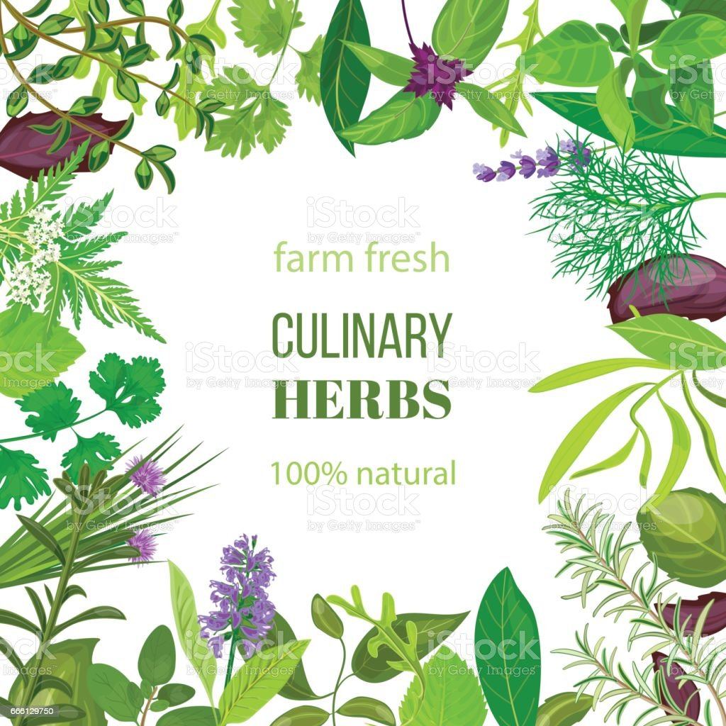 Culinary herbs ornament with text 100 natural vector art illustration