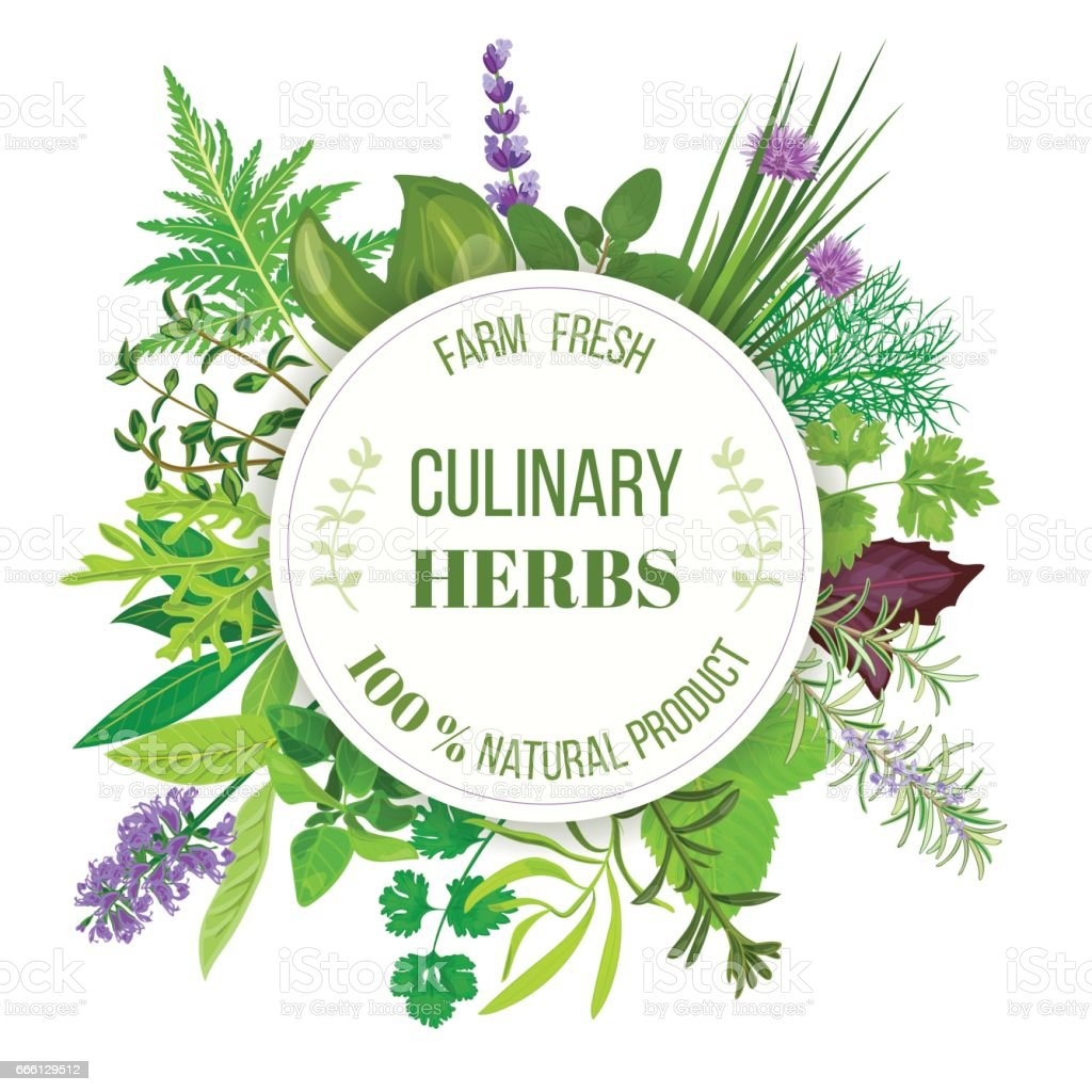 Culinary herbs round emblem vector art illustration