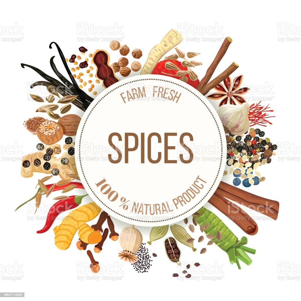 Culinary spices big set vector art illustration