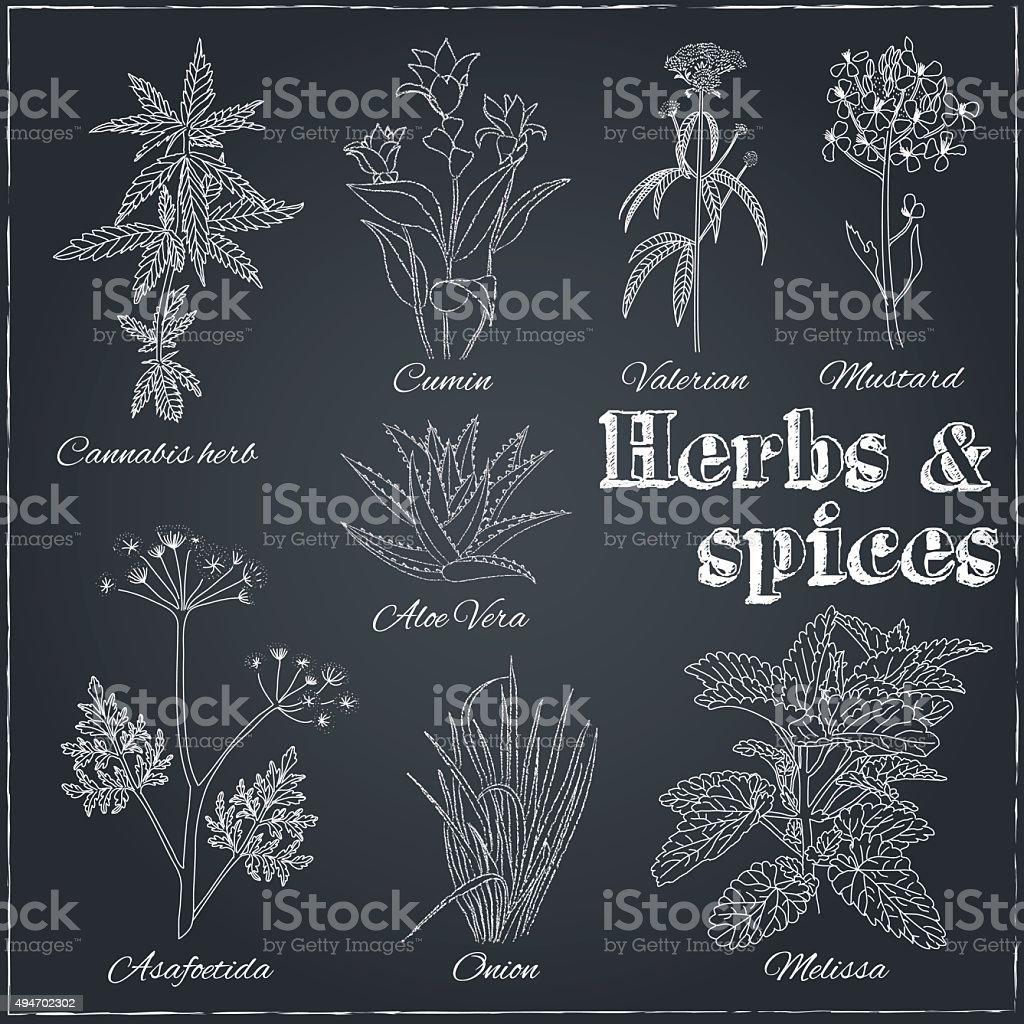 cumin, valerian, mustard, aloe vera, asafoetida, onion, melissa vector art illustration