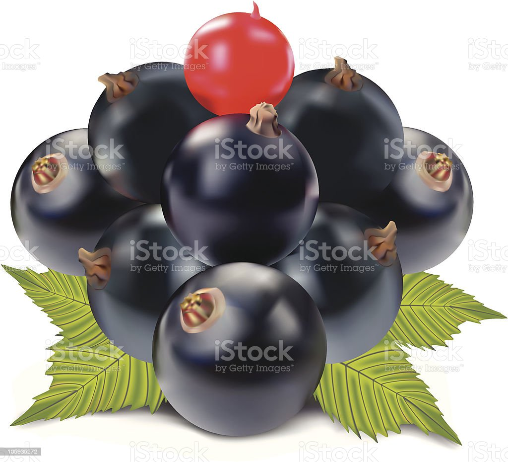 Currant black and red royalty-free stock vector art