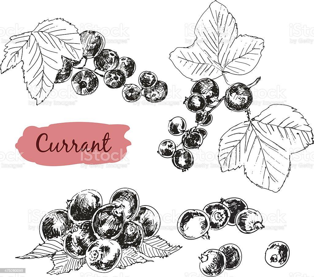 Currant vector art illustration