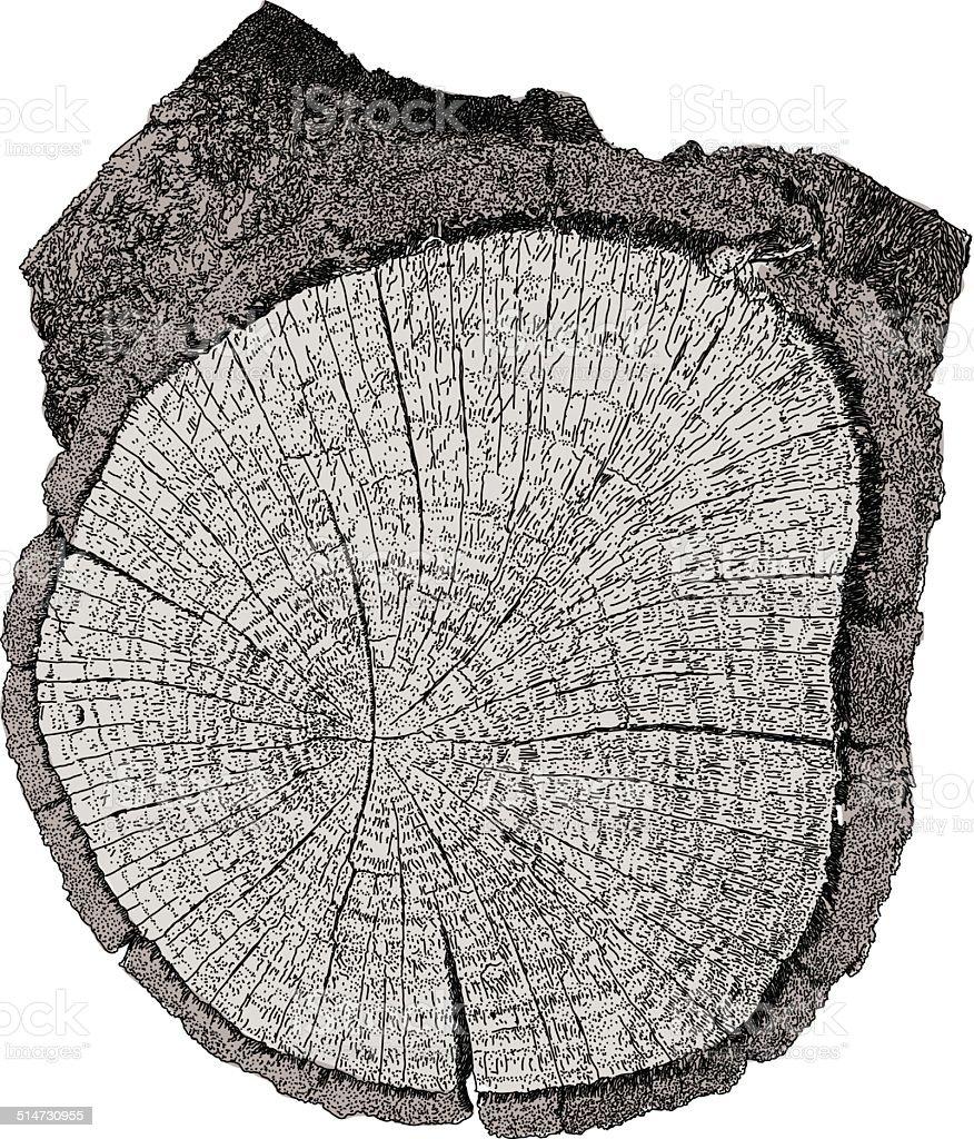 Cut Log vector art illustration