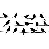 Cute black birds on a wire