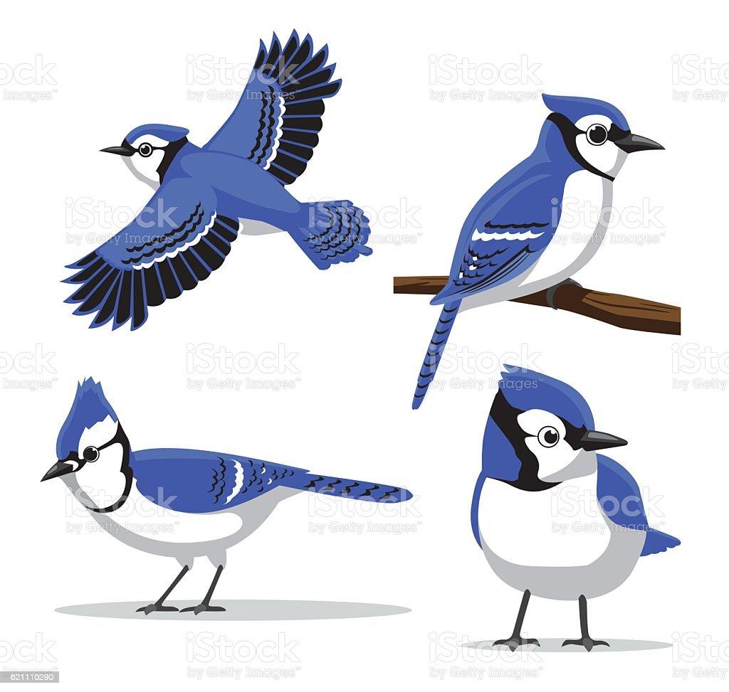 Cute Blue Jay Poses Cartoon Vector Illustration vector art illustration