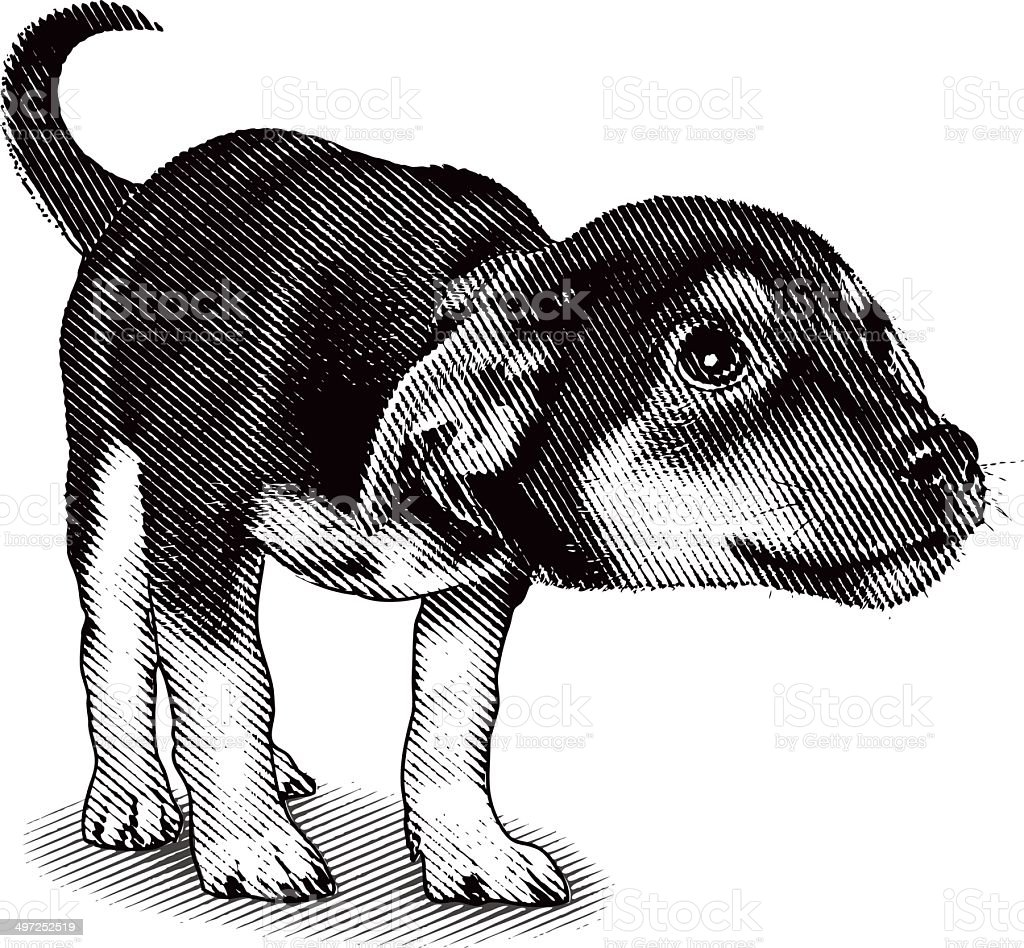 Cute, Curious Puppy royalty-free stock vector art