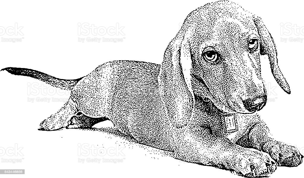 Cute Dachshund Puppy vector art illustration