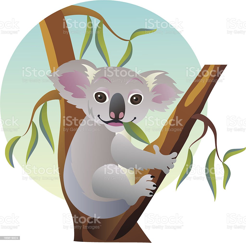 Cute Eating Baby Koala Bear Sitting on Australian Eucalyptus Tree vector art illustration