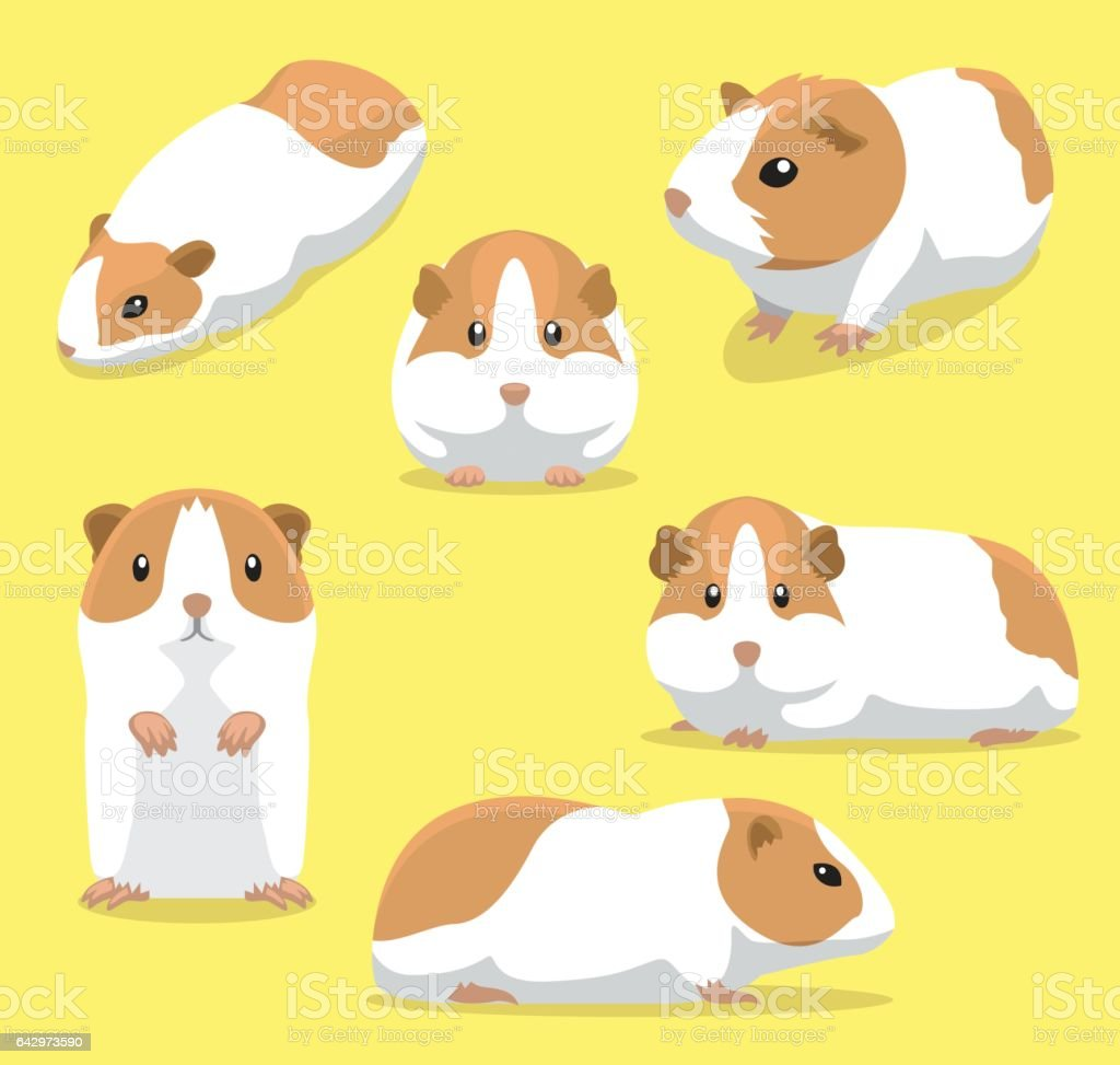 Cute Guinea Pig Poses Cartoon Vector Illustration vector art illustration