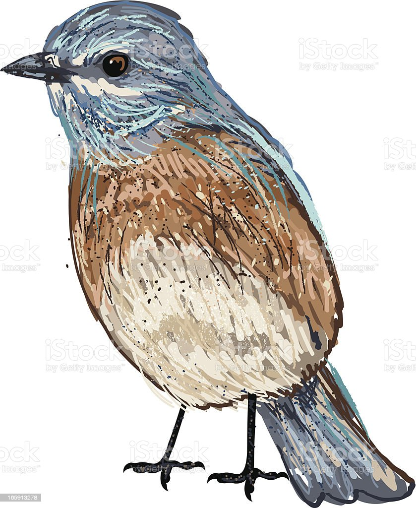 Cute Sketchy Eastern Bluebird vector art illustration