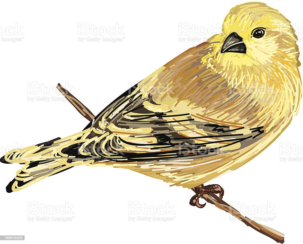 Cute Sketchy Goldfinch On Branch royalty-free stock vector art