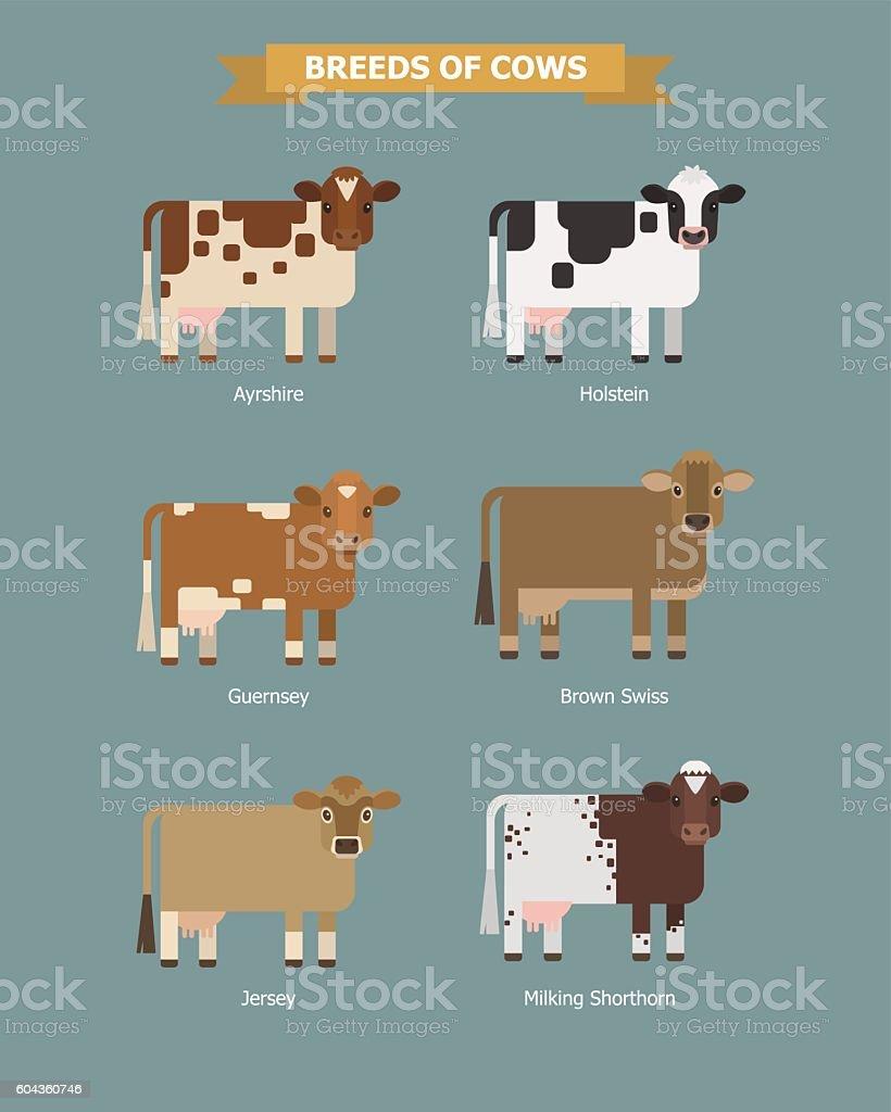 Cute vector cows vector art illustration