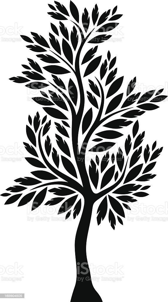 cypress royalty-free stock vector art