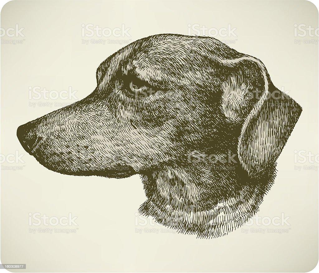 Dachshund dog breed, hand drawing. Vector illustration. royalty-free stock vector art